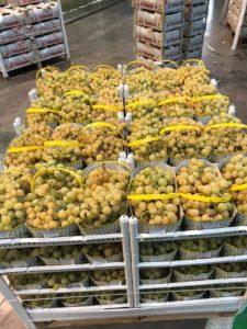 Geni's Obst & Gemüse Fachgroßhandel in Garmisch Partenkirchen - Trauben vom Großmarkt Verona