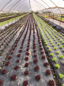 Geni's Obst & Gemüse in Garmisch Partenkirchen - Ware aus Verona